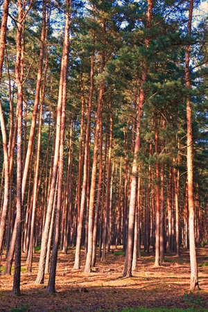 Woods in summer
