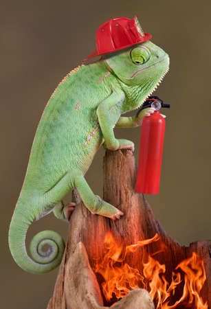 A veiled chameleon is wearing a firehat and holding a fire extinguisher while looking down at a fire.