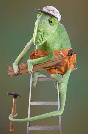 A chameleon is dressed as a carpenter on a ladder.