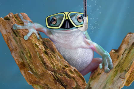 A whites tree frog is underwater wearing goggles and a snorkel.