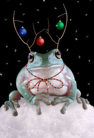 A whites tree frog is sitting in the snow wearing fake reindeer antlers.
