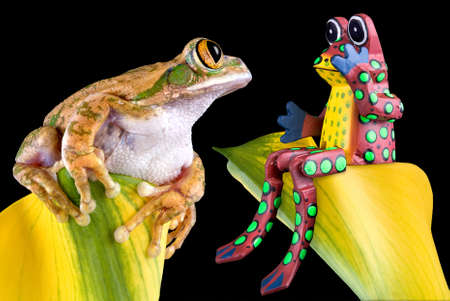 A big-eyed tree frog is looking at a toy frog that seems surprised.
