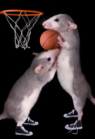 two dumbo rats are playing basketball.