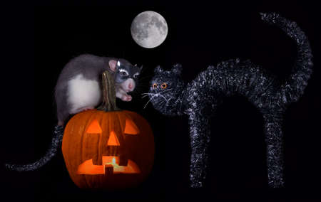 A rat is wearing a cat mask for halloween.