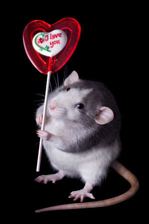 A rat is holding a valentine lollipop that says, Stock Photo - 6267856