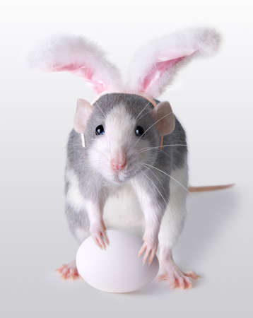 A rat is wearing bunny ears and holding an egg for Easter.