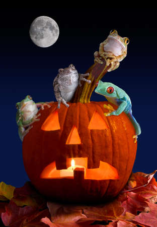 A group of tree frogs are sitting on a pumpkin on Halloween night.