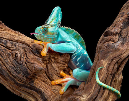 A creature appears to be part frog and part chameleon.