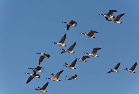 migrations: Flying South Stock Photo