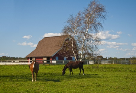 Two horses grazing in the pasture. photo