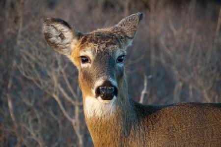 鹿の顔を楽しみにして