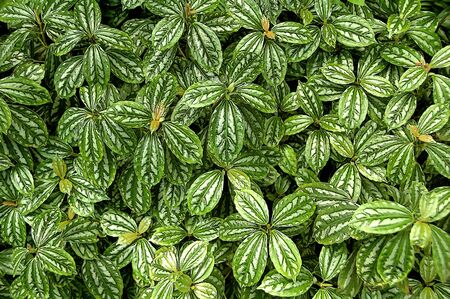 Background of green leaves Imagens