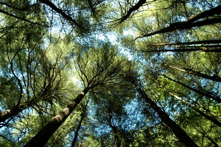 Looking up at the forest canopy 写真素材