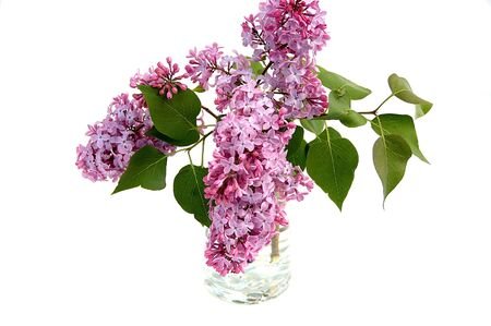 Small bunch of lilacs in a glass of water with a white background