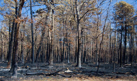 The damage from a wild fire Stock Photo