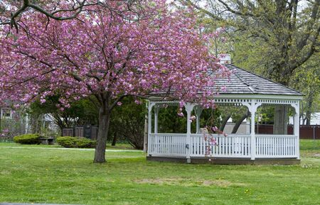 A gazebo in a park with pink flowering trees