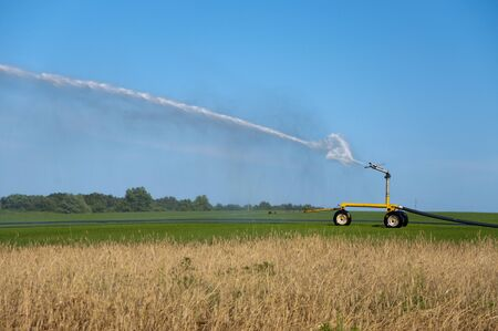 irrigate: A large sprinkler waters the sod on the farm
