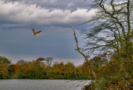 A bird flies over the river of a wildlife refuge