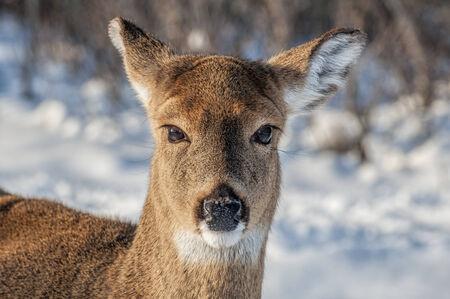 Close up of a deer Stock Photo