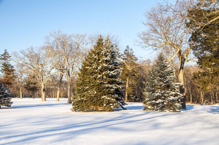 A snowy landscape with pines and bare trees Stock Photo