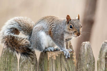 Image result for squirrel on a stockade fence