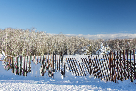 frigid: Snow covered trees and field following a storm