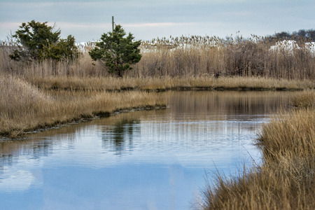 An inland tidal pool surrounded by reeds and scrub pines. Stock Photo - 59117185