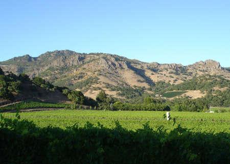 Napa valley vineyard Zdjęcie Seryjne