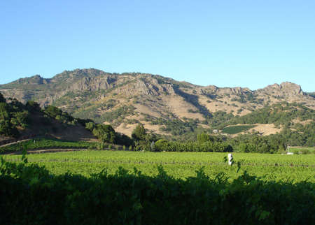 napa valley: Napa valley vineyard Stock Photo
