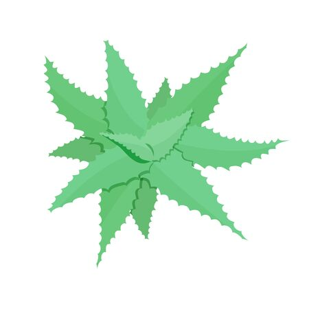 illustration of aloe vera plant blue green tint top view in flat style. medicinal plant, traditional medicine. for design, cosmetics. Vector graphics