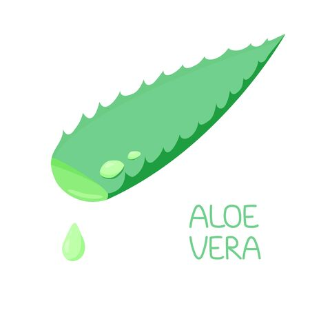 illustration leaf aloe vera plants with drops of aloe juice, water. flat style. traditional medicine, medicinal plant. for design, cosmetology, skin care. vector
