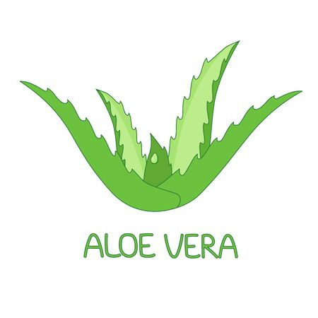 Illustration of aloe vera plant with a drop of aloe juice. medicinal plant, traditional medicine, skin care. for design. vector