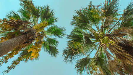 Green bright high palm trees blue sky tropic background