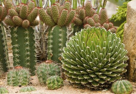 types of cactus: many types of Cactus