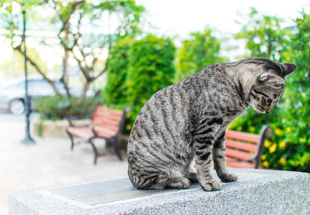 Portrait of tabby cat  sitting on stone platform in the park Stock Photo
