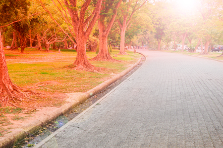 Walkway in the public park. Empty bicycle road in a park on early morning Stock Photo