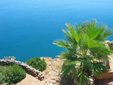Palm on old Antalyan beach