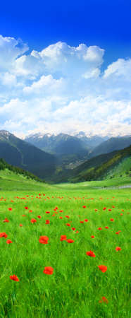Green field with red flowers in Mountain Stock Photo - 782330