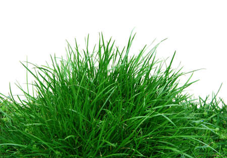 insipid: Bush of Green Juicy Grass Stock Photo