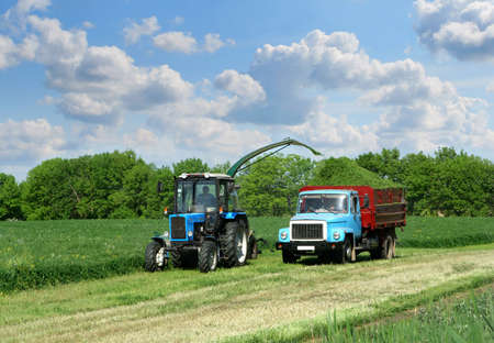 Harvester crop the green grass and load in to cargo