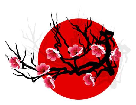 Sakura blossoms on tree silhouette over red sun