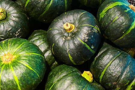 A lot of green pumpkin. Close-up view.