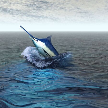 sailfish: BLUE MARLIN