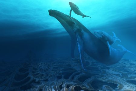 blue whale: FOSSILS Stock Photo