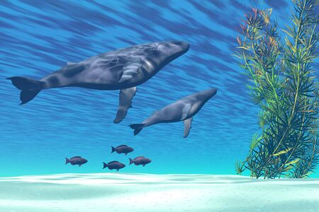 Mom and baby Humpback whales swim together in a crystal clear ocean. Stock Photo - 4306987