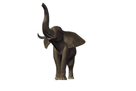 enormous: Beautiful pachyderm male with enormous tusks. Stock Photo