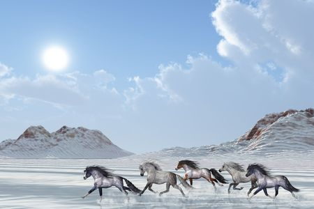 snows: A herd of wild horses run in the snows of a bright winter day.