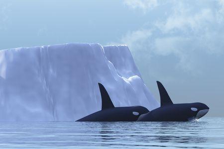 flee: Two Killer Whales swim near an iceberg in the Arctic Ocean.