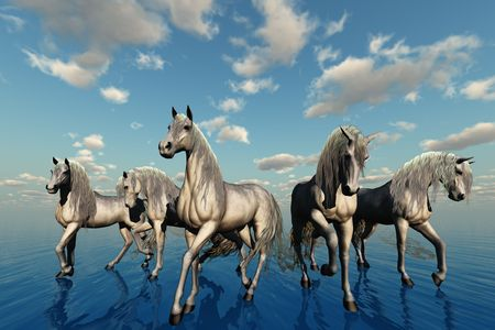 A group of horses with the same breed, temperament and color represent harmony.