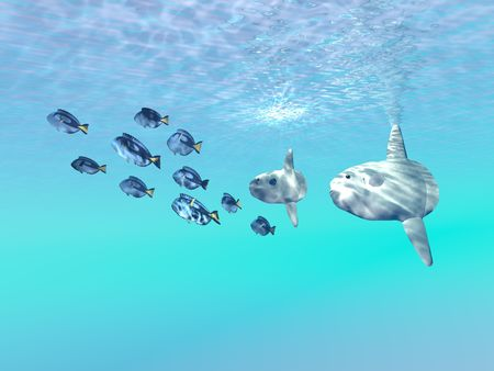 sunfish: SUNFISH - Two large sunfish escort a school of Blue Tango fish in the clear sunlit ocean. Stock Photo